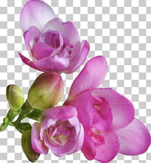 Petal Violet Flower Portable Network Graphics PNG