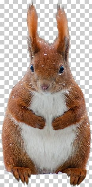 Tree Squirrels Animation PNG