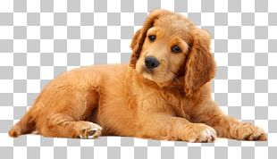 Dog Pet Puppy Cat PNG