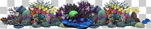 Coral Reef Underwater Alcyonacea Sea PNG