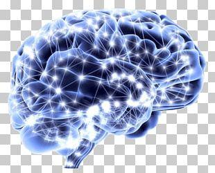 Human Brain Neuroscience Neuron Homo Sapiens PNG