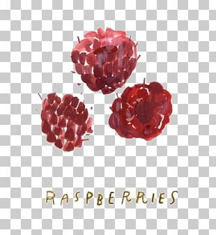 Raspberry Cartoon Illustration PNG