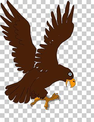 Bald Eagle Bird Of Prey PNG