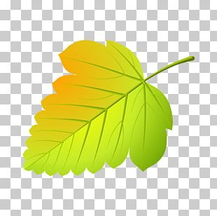 Maple Leaf Abscission Tree Viburnum PNG