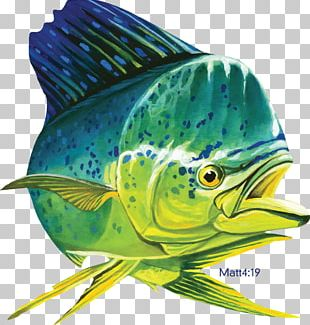 69 Mahi Mahi Stock Vector Illustration A #893861 - PNG Images - PNGio
