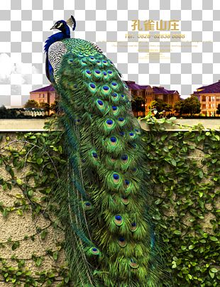 Advertising Poster Real Property Real Estate Peafowl PNG