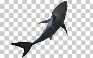Great White Shark Lamniformes Hammerhead Shark PNG