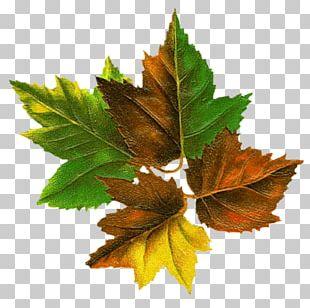 Tree Autumn Leaf Color Autumn Leaf Color Root PNG