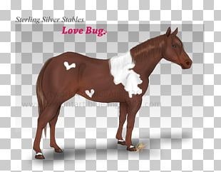 Stallion Mustang Halter Mare Pony PNG