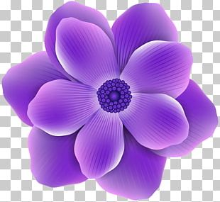Flower Purple Rose PNG