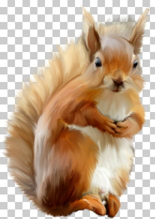 Domestic Rabbit Dog Protein Cat Tree Squirrels PNG