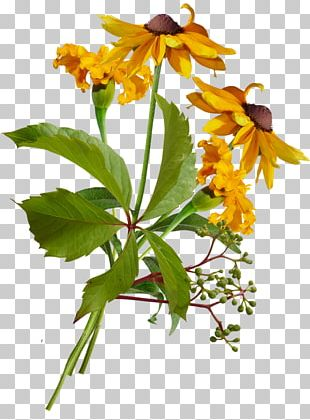 Plant Stem Flowering Plant Herbaceous Plant Wildflower PNG