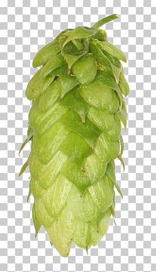 Beer India Pale Ale Common Hop Hops Brewery PNG