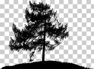 The Lonely Tree Oak PNG
