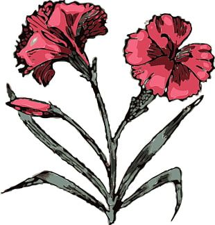 Carnation Scalable Graphics Free Content PNG