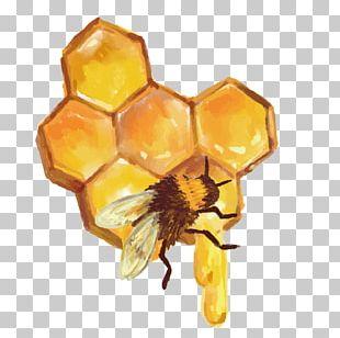 Beehive Honeycomb Honey Bee PNG
