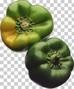 Bush Tomato Food Tomatillo PNG