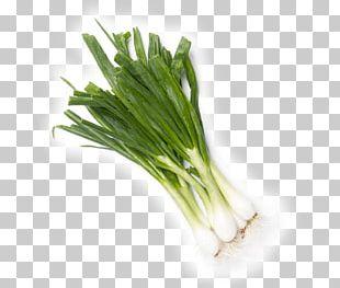 Allium Fistulosum Calçotada Leek Scallion PNG