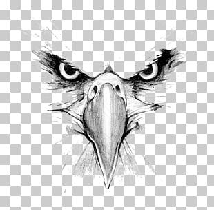 Bald Eagle Drawing Hawk Mountain Sanctuary Golden Eagle PNG