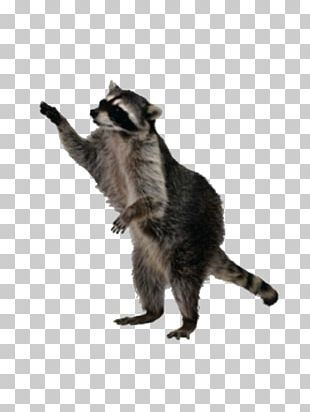 Raccoon Squirrel PNG