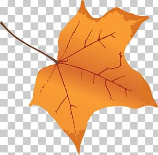 Autumn Leaf Color Tree Maple PNG