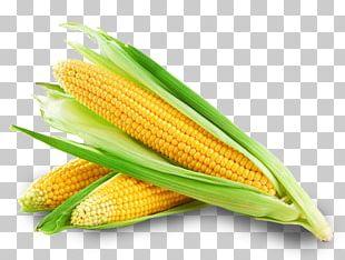 Corn On The Cob Sweet Corn Maize Corncob Corn Oil PNG