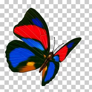 Butterfly Transparency And Translucency Icon PNG