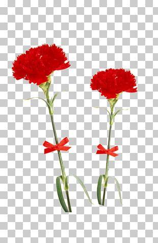 Carnation Flower Multiflora Rose Red Beach Rose PNG