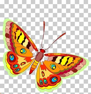 Monarch Butterfly Moth Portable Network Graphics PNG