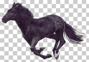 Pony Mustang American Paint Horse Mane Stallion PNG