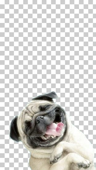 Pug IPhone 6 Plus Puppy PNG