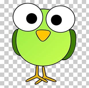 Bird Cartoon Drawing PNG