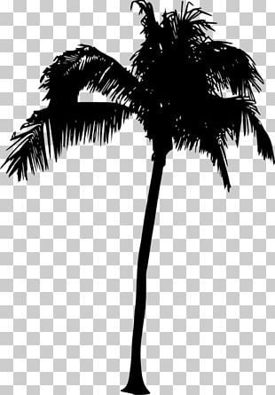 Asian Palmyra Palm Arecaceae Silhouette Sabal Palm Tree PNG