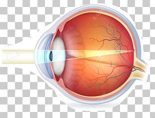 Human Eye Biology Anatomy Eye Care Professional PNG