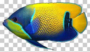 Holacanthus Aquariums Coral Reef Fish Marine Biology PNG