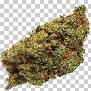 Cannabis Sativa Kush Cannabidiol Medical Cannabis PNG