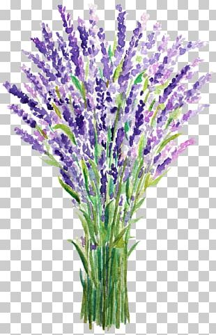 English Lavender French Lavender Watercolor Painting PNG