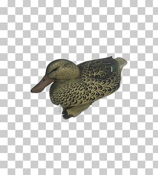 Mallard Duck Beak PNG