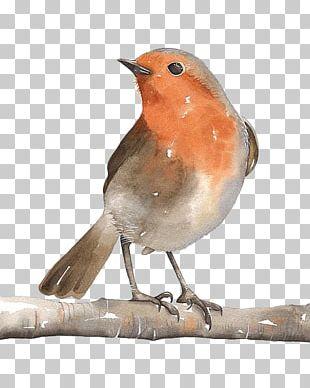 Bird Watercolor Painting Art European Robin PNG