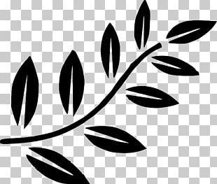 Branch Leaf Tree PNG