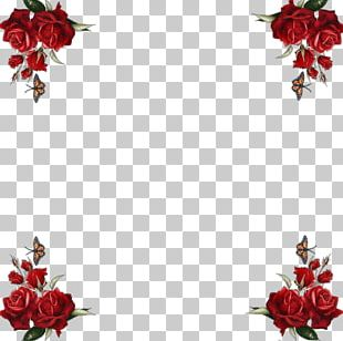 Frames Photography Flower PNG