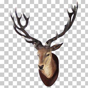 White-tailed Deer Moose PNG