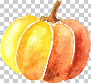 Pumpkin Watercolor Painting PNG