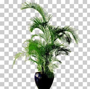 Flowerpot Bonsai PNG