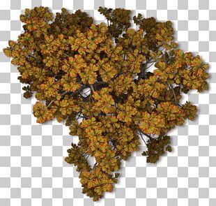 Tree Autumn Leaf Color Plant PNG