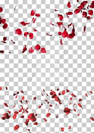 Petal Rose Flower Stock Footage PNG