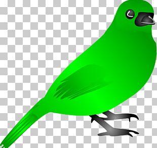Bird Flight Green PNG