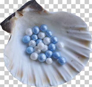 Seashell Restaurant Seashell #6 Molluscs Spiral PNG