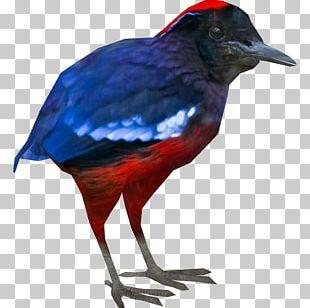 Garnet Pitta Zoo Tycoon 2 Beak Foot PNG