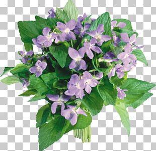 Flower Bouquet Violet Tulip PNG
